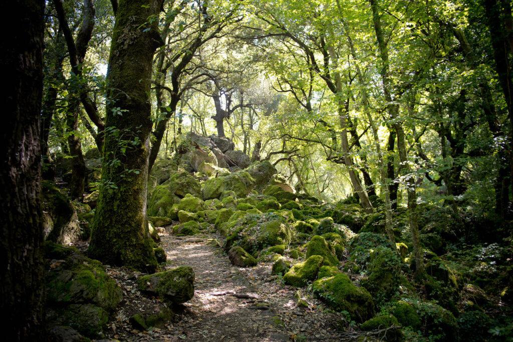 The forest the Bosco del Sasseto in Lazio