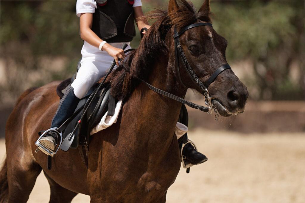 A young boy rides his horse