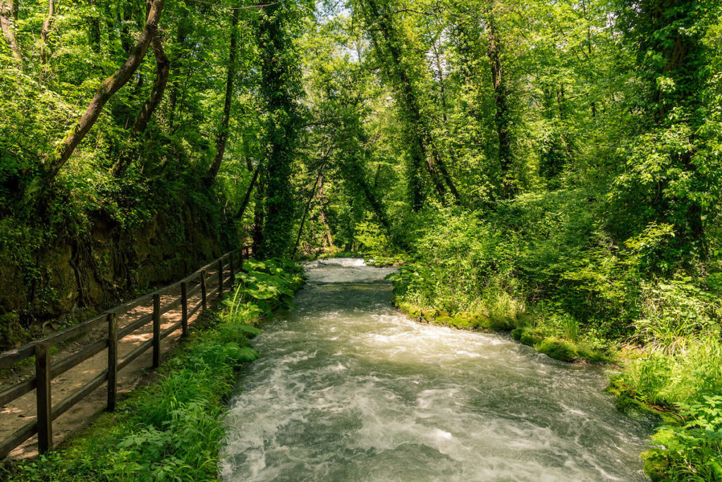 A stream surrounded by splendid vegetation in Umbria.